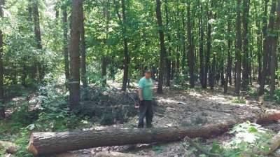 Жителей Киева возмутила вырезка деревьев в одном из парков