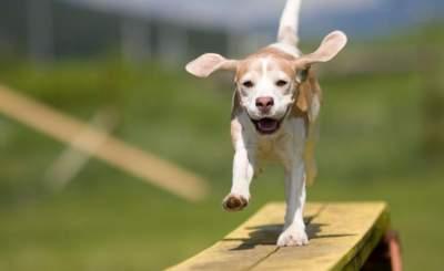 На киевских Березняках появилась площадка для выгула собак