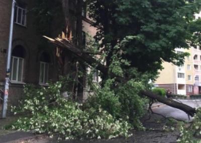 В Киеве штормовой ветер повалил деревья