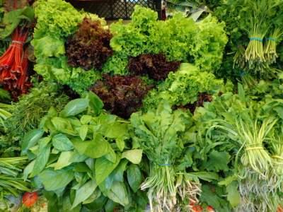 Диетологи рассказали о вредном свойстве огородной зелени