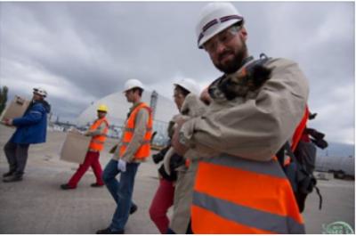 Бездомных щенков из Чернобыля отвезут жить в США