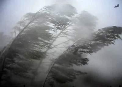 Жителей Киева предупредили о штормовом ветре