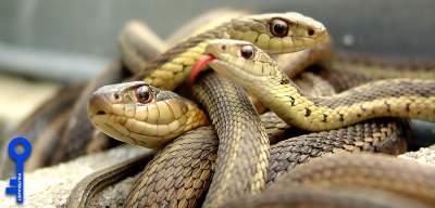 Под Киевом активизировались ядовитые змеи: что делать в случае укуса