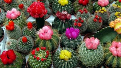 В Киеве пройдет необычная цветочная выставка
