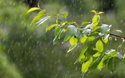 Украинцам рассказали, какой будет погода этим летом