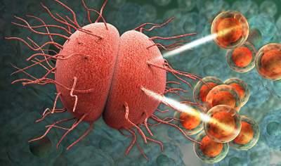 Ученые исследовали воздействие антибиотиков на мозг