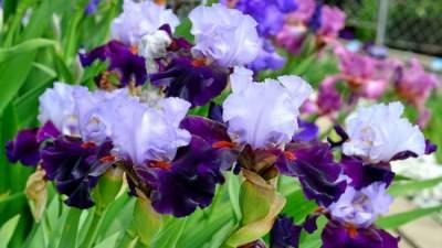 В киевском ботсаду открылась необычная цветочная выставка