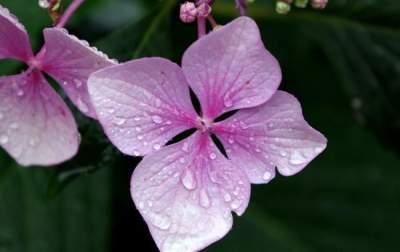 Синоптики рассказали, где пройдут дожди с грозами на выходных
