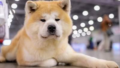 Собаки станут источником новых эпидемий гриппа, — ученые