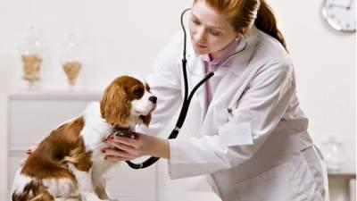 Собачий грипп: ученые предупреждают о распространении опасного вируса