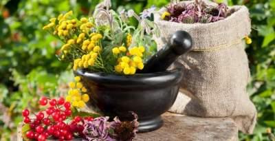 Эти лечебные растения понижают уровень вредного холестерина