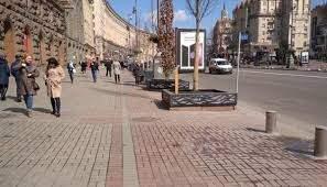 В Киеве проходят выборы деревьев, которые посадят на Крещатике