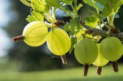 Этот летний продукт может предотвратить болезни сердца