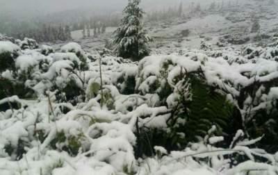 Видео о летнем снегопаде в Карпатах набирает популярность