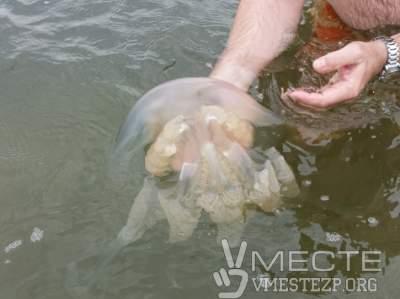 На Азовском побережье – нашествие больших медуз