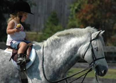 На киевском ипподроме детей бесплатно покатают на лошадях