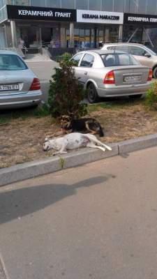 Настоящая верность: Киевлян растрогал пес, который охранял погибшую подругу