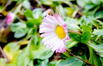 Названы растения, которые помогут победить усталость