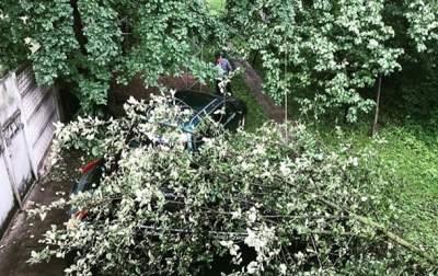 На Житомирщине рухнуло дерево на автомобиль знаменитого украинского музыканта