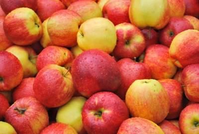 Употребление яблок снижает риск возникновения рака, — ученые