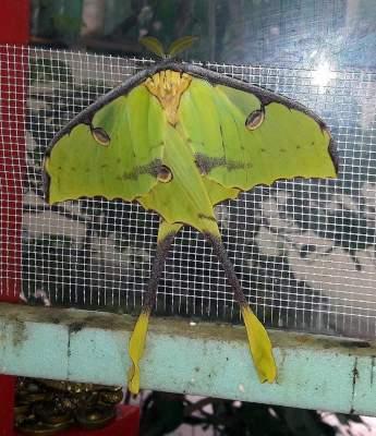 В Николаевском зоопарке родилась уникальная бабочка