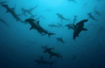 Ученые научились применять клетки акулы для борьбы с раком
