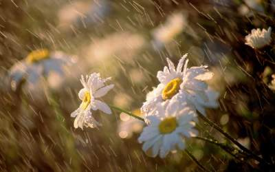 По всей Украине пройдут кратковременные дожди