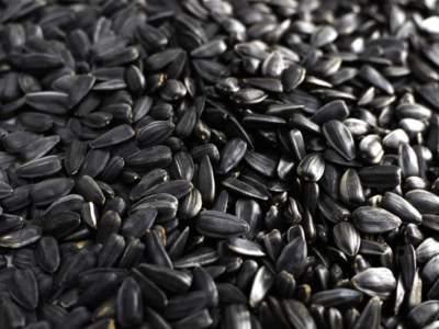 Медики предупредили о вредных свойствах семечек