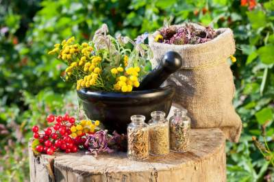 Эти растения можно использовать в качестве антибиотиков