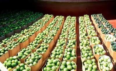 Стало известно, когда в Киев прибудет первая баржа с херсонскими арбузами