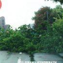 В Киеве дерево упало прямо на проезжую часть