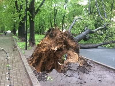 Под Киевом упавшие на дороги деревья заблокировали движение