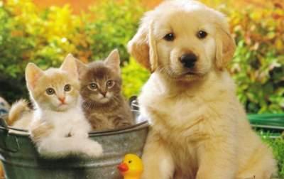 Супрун рассказала, как домашние животные влияют на здоровье