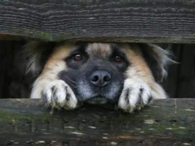 В Украине призвали запретить держать собак в многоэтажках