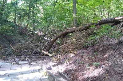 Киевлян возмутило состояние парка «Нивки»