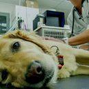 В Киеве от живодера спасли собаку