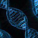 Ученые выяснили правду о геноме человека