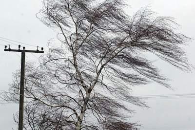 В Киеве ожидается сильный ветер: как спасти себя и авто