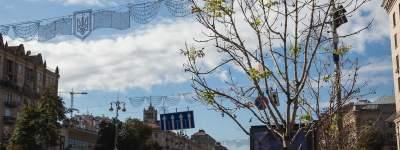 Стало известно, какие деревья высадят на Крещатике вместо каштанов