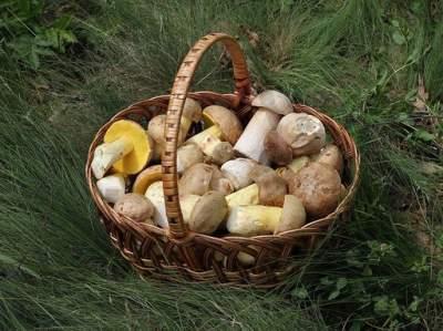 Медики рассказали, как не отравиться грибами