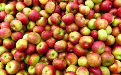 Врачи назвали фрукт, который желательно есть ежедневно