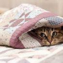 Кличко рассказал, когда в квартирах киевлян потеплеет