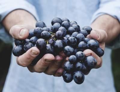 Диетологи рассказали, кому нельзя есть виноград