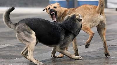 В Киеве будут бесплатно вакцинировать собак