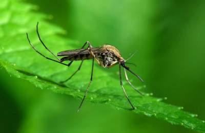 Медики рассказали, чем опасен укус комара