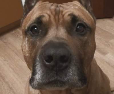 Ученые обнаружили у собак способность выявлять болезни людей
