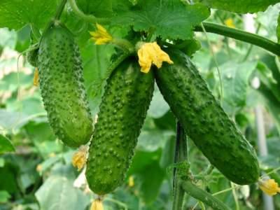 Этот популярный овощ укрепляет сердце и улучшает пищеварение