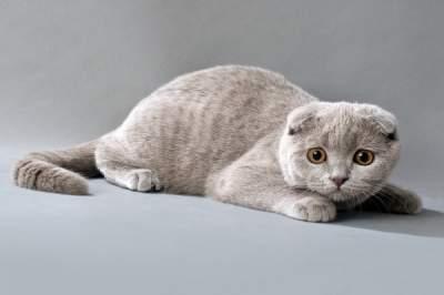 Выявлена неожиданная опасность домашних кошек