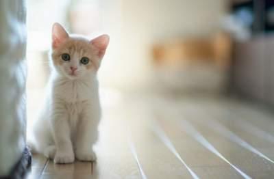 Паразиты домашних кошек могут вызывать шизофрению, - ученые