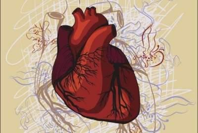Названы важнейшие микроэлементы для здоровья сердца